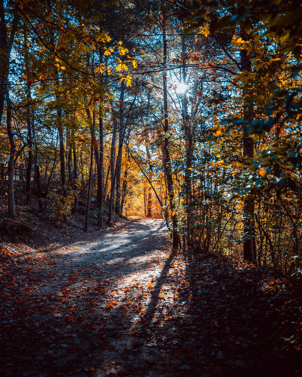 A forest trail in fall with the sun filtering through the trees