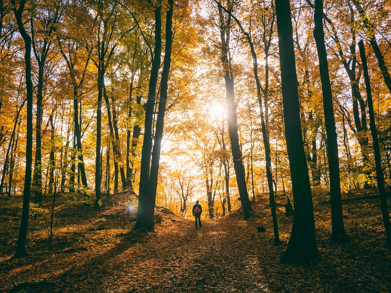 Rewild Wellness Thanksgiving forest therapy walk