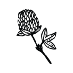 Icon of clover