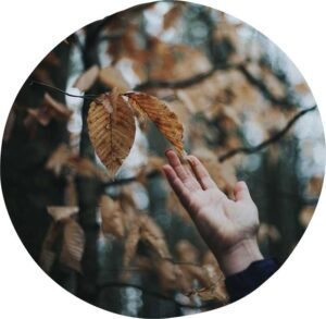 An outstretched hand reaching up to touch some fall leaves on a tree