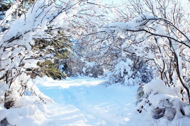 A snowy trail through trees